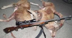 شکارچیان غیر مجاز 3 محیط بان را مجروح کردند