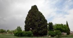 پیرترین موجود زنده ایران در آستانه مرگ