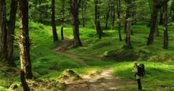 «سیاهگالش» نماد حافظ زیست بوم کوهستانهای گیلان