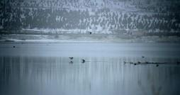 تور آشنایی با پرندگان مهاجر در تالاب شورابیل برگزار شد