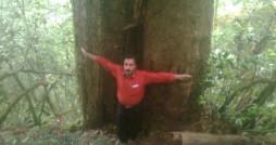 شناسایی بزرگ ترین درخت سرخدار هیرکانی در مازندران