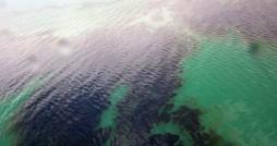 برآورد خسارت محیط زیستی لکه های نفتی خلیج فارس