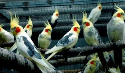 100 قطعه پرنده کمیاب از اتوبوسی در بیرجند کشف شد