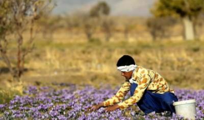 معرفی گردشگری کشاورزی یا مزرعه