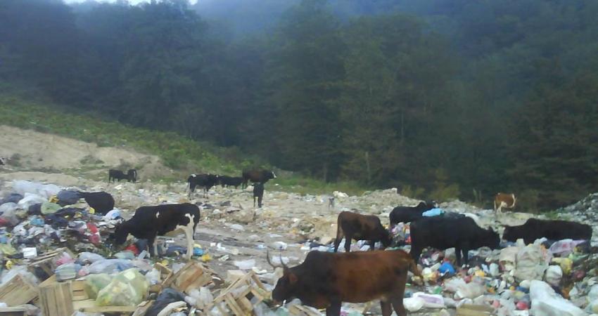 معضل زباله شمال،ارزان درمان نمی شود