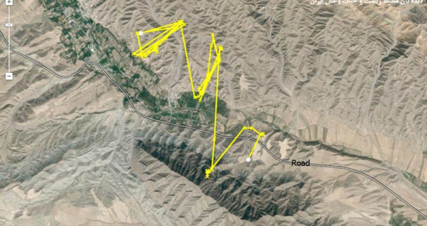 پلنگ مجهز به گردنبند ردیاب از مرز ایران عبور کرده و وارد ترکمنستان شد