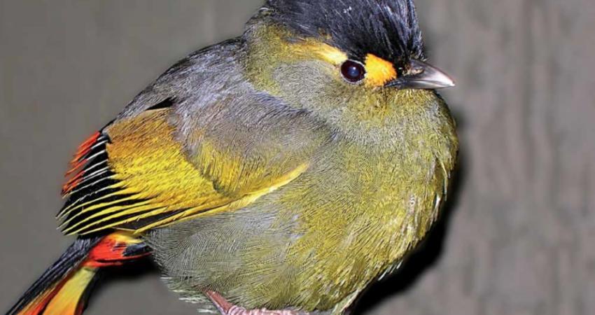 شناسایی 200 گونه جدید در شرق هیمالیا