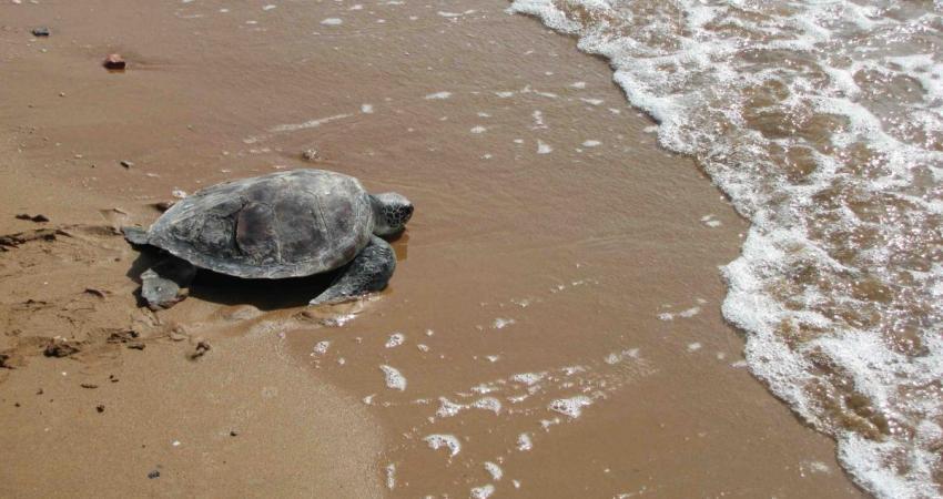 ثبت بین المللی جزیره شیدور به عنوان زیستگاه لاک پشت های دریایی