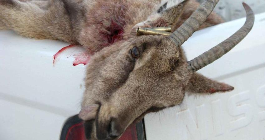 آزمایش ژنتیک، حکم محکومیت شکارچی غیرمجاز را صادر کرد