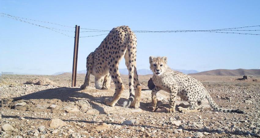 تنوع زیستی پناهگاه حیات وحش میاندشت