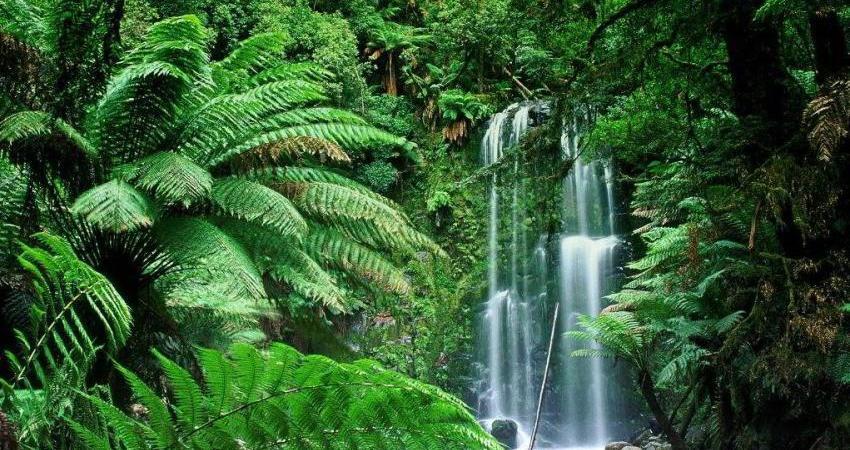 چالش های پیش روی جنگل های استوایی در 2016