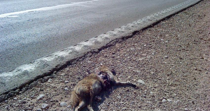 وداع حیات وحش با زندگی در بستر جاده ها