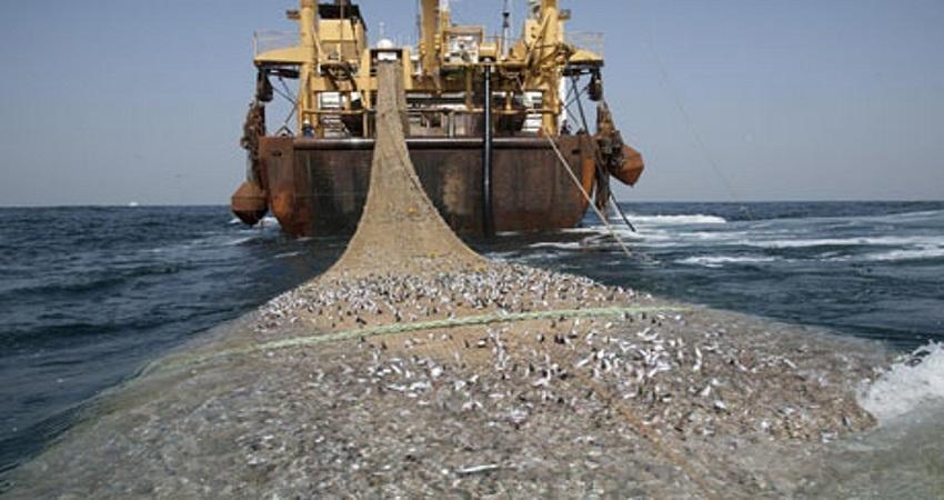 کنفرانس جرایم محیط زیستی بانکوک چه راه حلی برای پایداری اقیانوس ها ارائه می کند؟