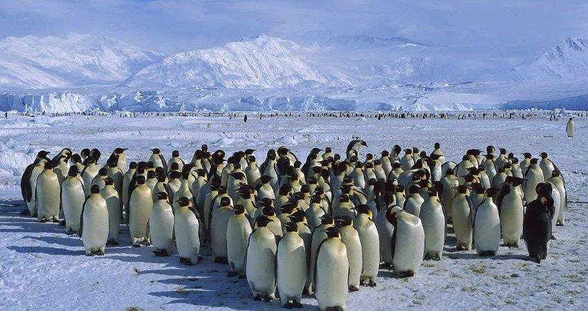 هنری ورسلی، قطب نورد تنهای قطب جنوب به خط پایان نرسید
