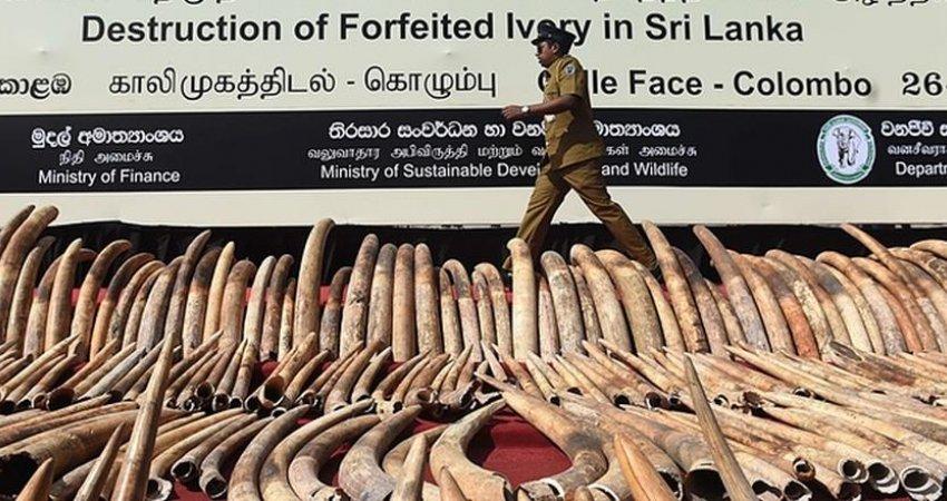 دو دقیقه سکوت به احترام فیل های کنیایی