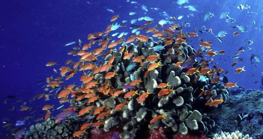 حفظ اقیانوس های جهان تلاش بیش تر می خواهد