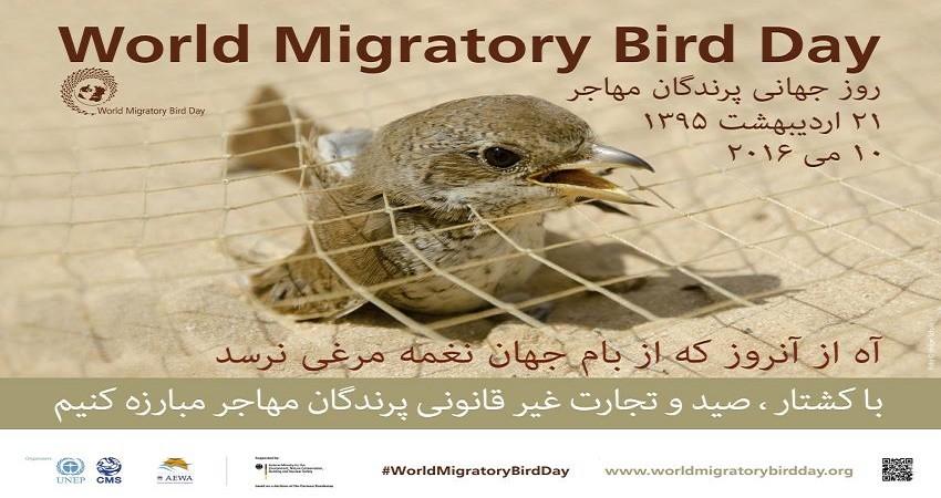 با کشتار، صید و تجارت غیرقانونی پرندگان مهاجر مقابله کنیم