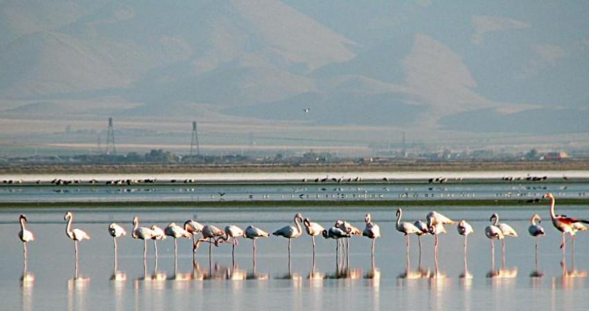 بازدید 50 نفر از تورگردان های کشور از جاذبه های گردشگری استان مرکزی
