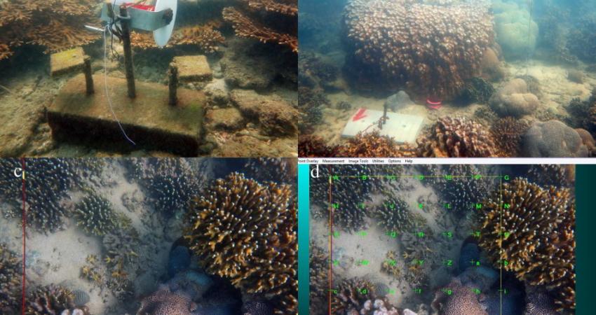 مرگ 35 درصد مرجان ها به دلیل رسوب گرفتگی