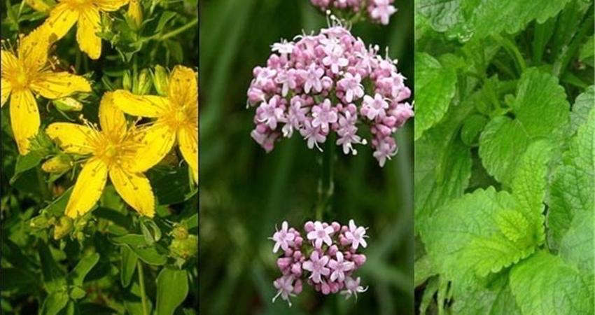 بیش از 2000 گونه گیاهی در معرض تهدید