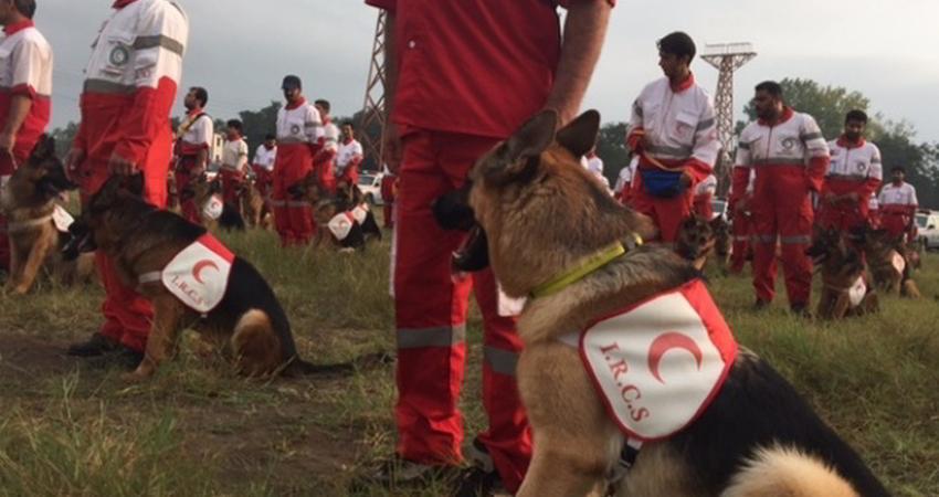 برگزاری نخستین المپیاد سگ های تجسس و نجات