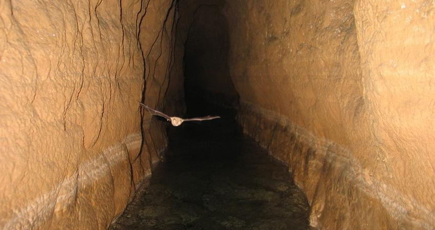 قنات قصبه گناباد شاهکار بشر در مدیریت منابع آب است