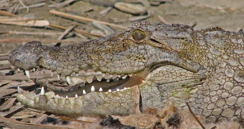 مدل سازی برای فاکتورهای مطلوب زیست تمساح پوزه کوتاه