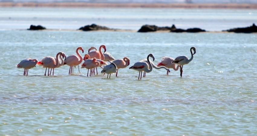 توسعه پایدار گردشگری، فرصتی برای حفظ و احیای تالاب ها