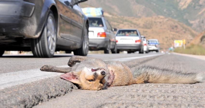 خروج جاده از پارک ملی گلستان بعد از ۲۰ سال منتفی شد