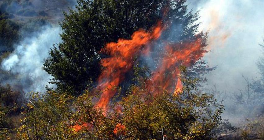 5 هکتار از جنگل های رودبار در آتش سوخت