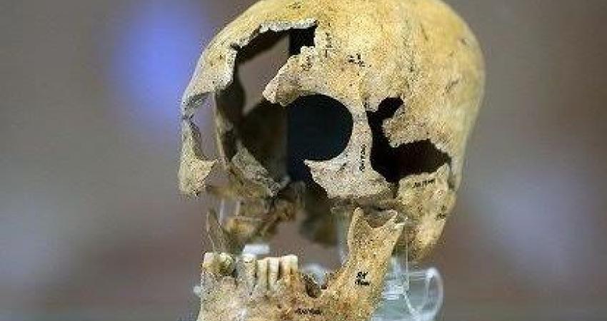 جمجمه منحصر به فرد هشت هزار ساله به نمایش درآمد