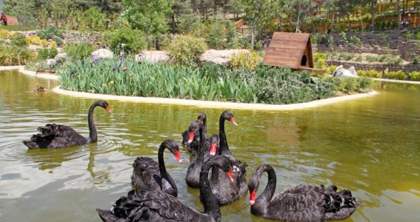 اولتیماتوم سازمان محیط زیست به باغ پرندگان تهران