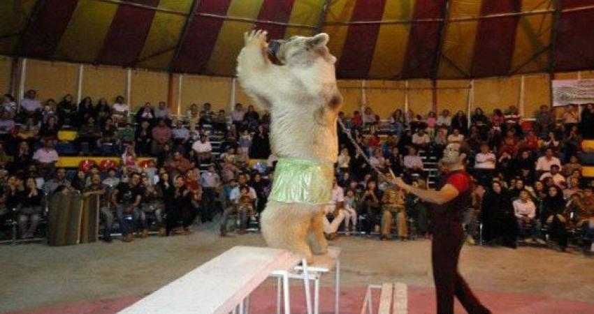 حذف کامل حیات وحش در سیرک ها تا پایان امسال