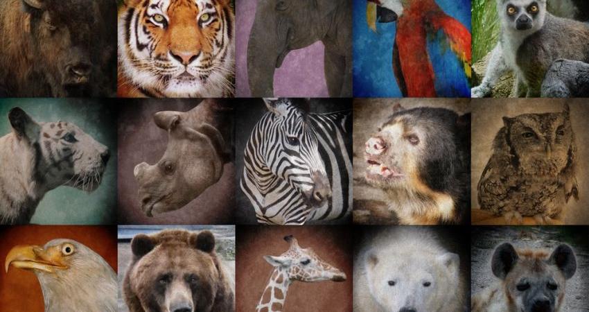 کدام کشورها بیشترین گونههای در معرض خطر را دارند؟