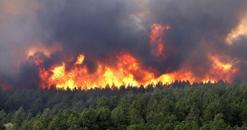 جنگل گلستان باز هم آتش گرفت