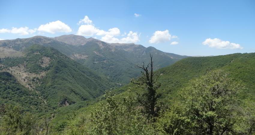 جنگل های هیرکانی یک قدم به ثبت جهانی نزدیک تر شد