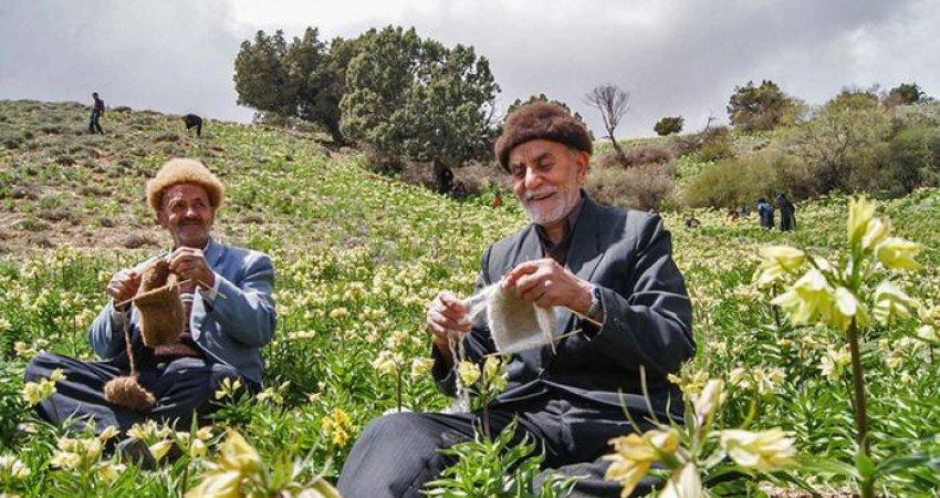 آیا جمعیت ایران در آستانه سالخوردگی است؟