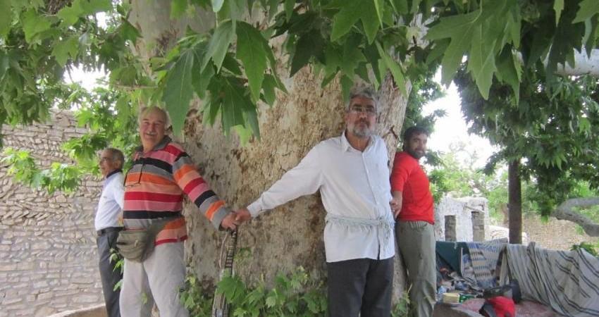 ثبت درخت چنار باجگان در فهرست آثار ملی