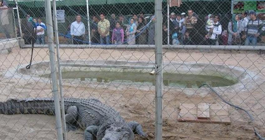 بازدید 40 هزار گردشگر از پارک کروکودیل قشم