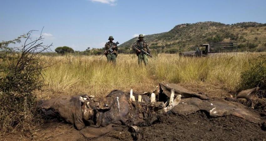 شکارچیان فیل سه رنجر را در یک پارک حیات وحش کشتند