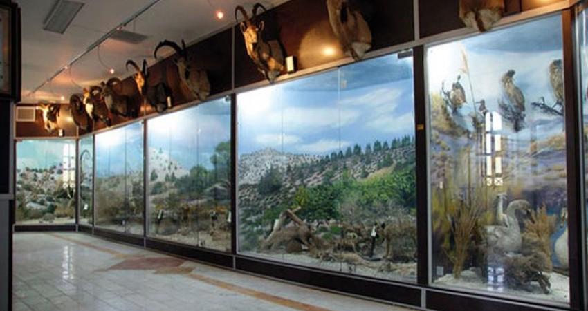 موزه هوشمند تاریخ طبیعی در شاهرود گشایش یافت