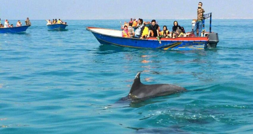 دلفین ها دیگر به گردشگران نمی خندند