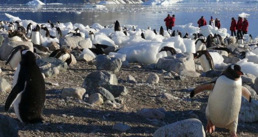 پای گردشگران هم به قطب جنوب باز می شود