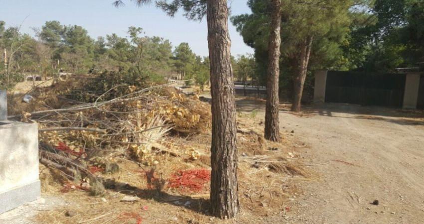 قطع 1700 اصله درخت در پارک جنگلی چیتگر توسط شهرداری