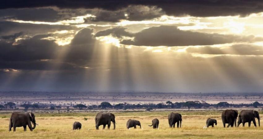 الگوی آفریقایی توسعه منطقه ای با گردشگری