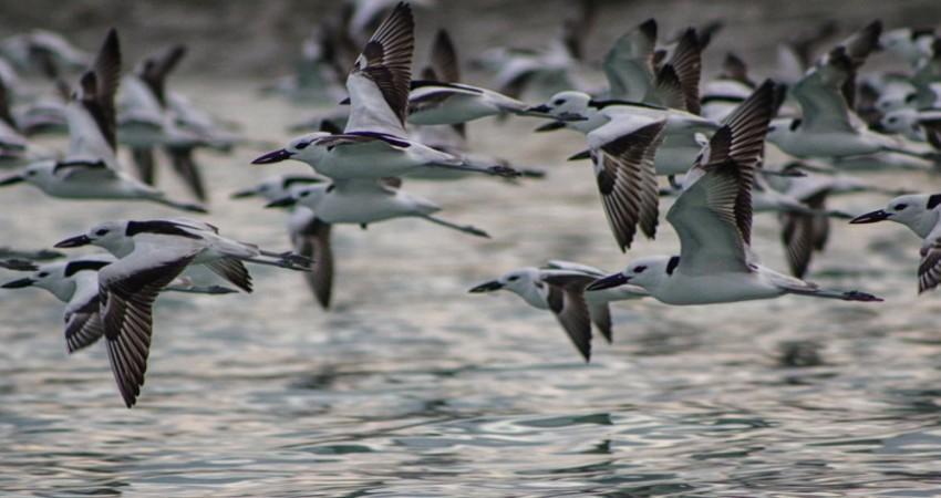 گردشگران، پرنده های مهاجر شمال را نخرند!