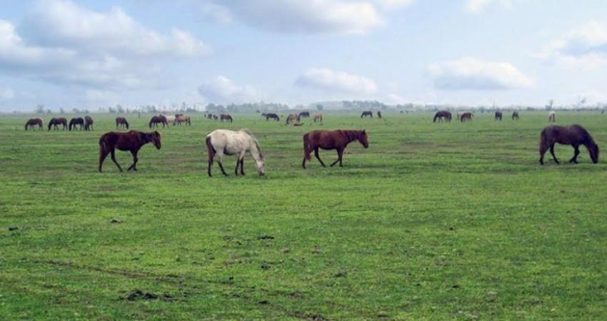 همکاری «جایکا» در راستای اجرای طرح طبیعت گردی در گیلان