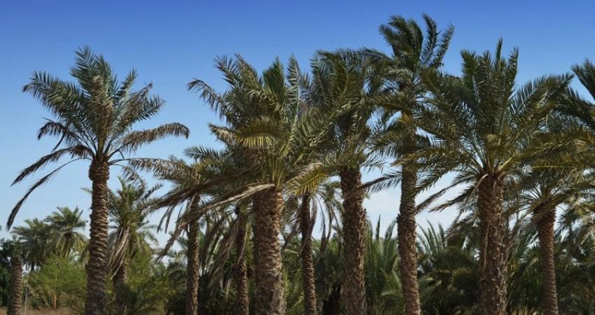 چرا اقتصاد روستاهای ایران به توریسم وابسته است؟