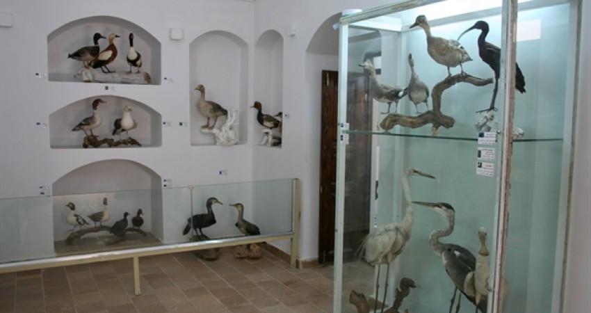 موزه تاریخ طبیعی خراسان جنوبی راه اندازی شد