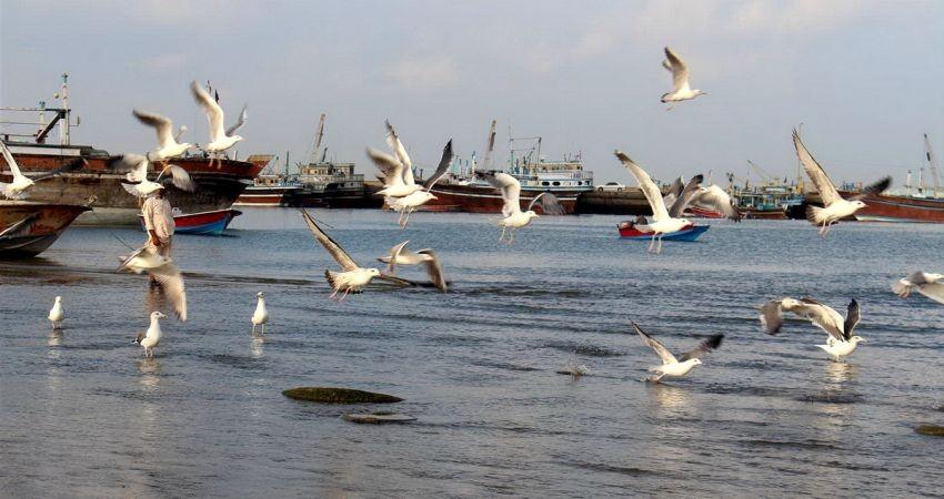 سواحل مکران در مسیر جذب گردشگر